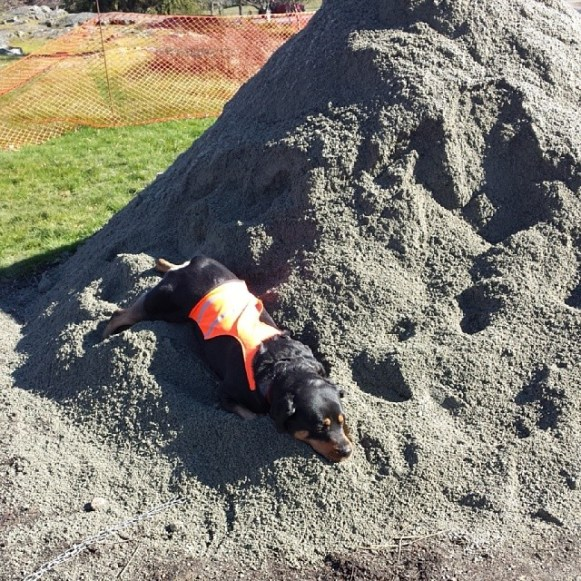 'Envy' in gravel