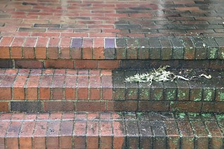Pressure washing brick pathways