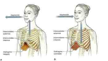 procesos de respiración