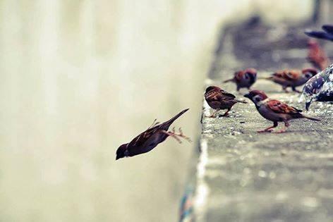 ser valiente es tomar las decisiones necesarias