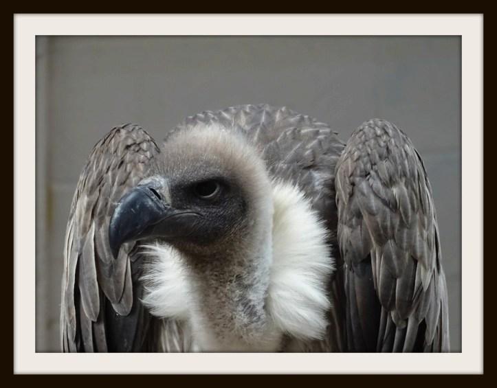 vultures b.jpg