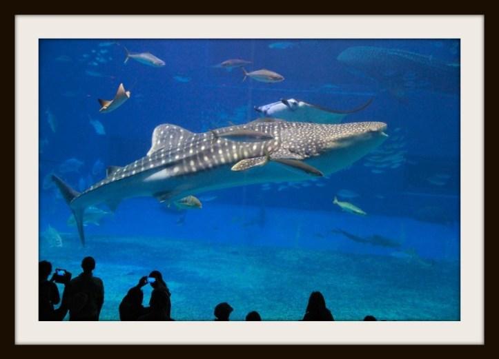whale too b.jpg