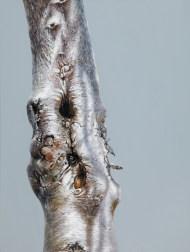 """Tree #15"", 2013, oil on canvas, 24 x 18"""