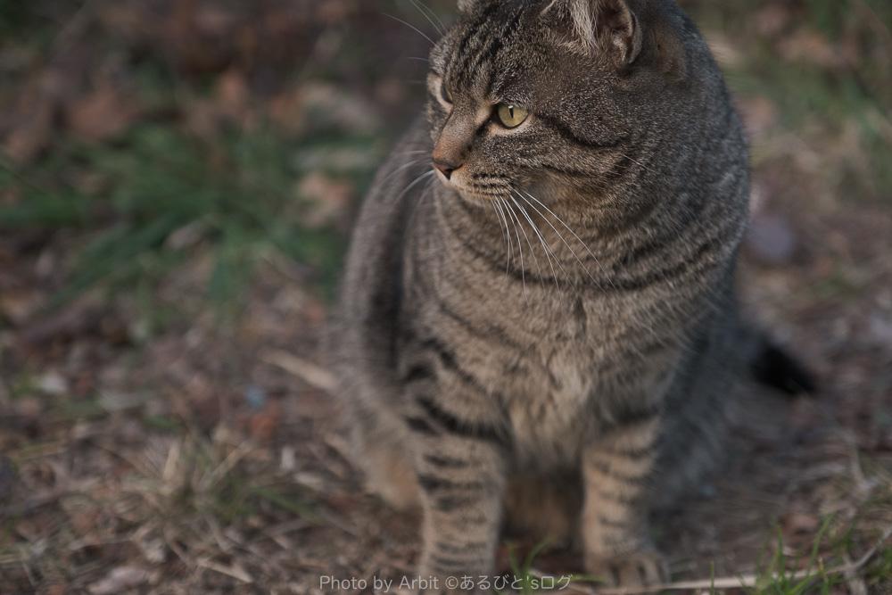 ネコをエテルナ で撮影