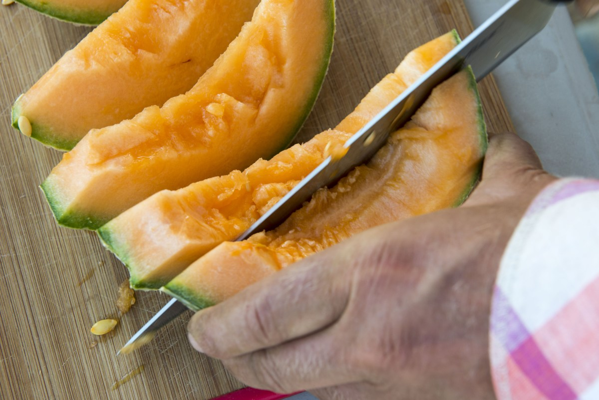 Dryfarmed cantaloupes being sliced for tasting.