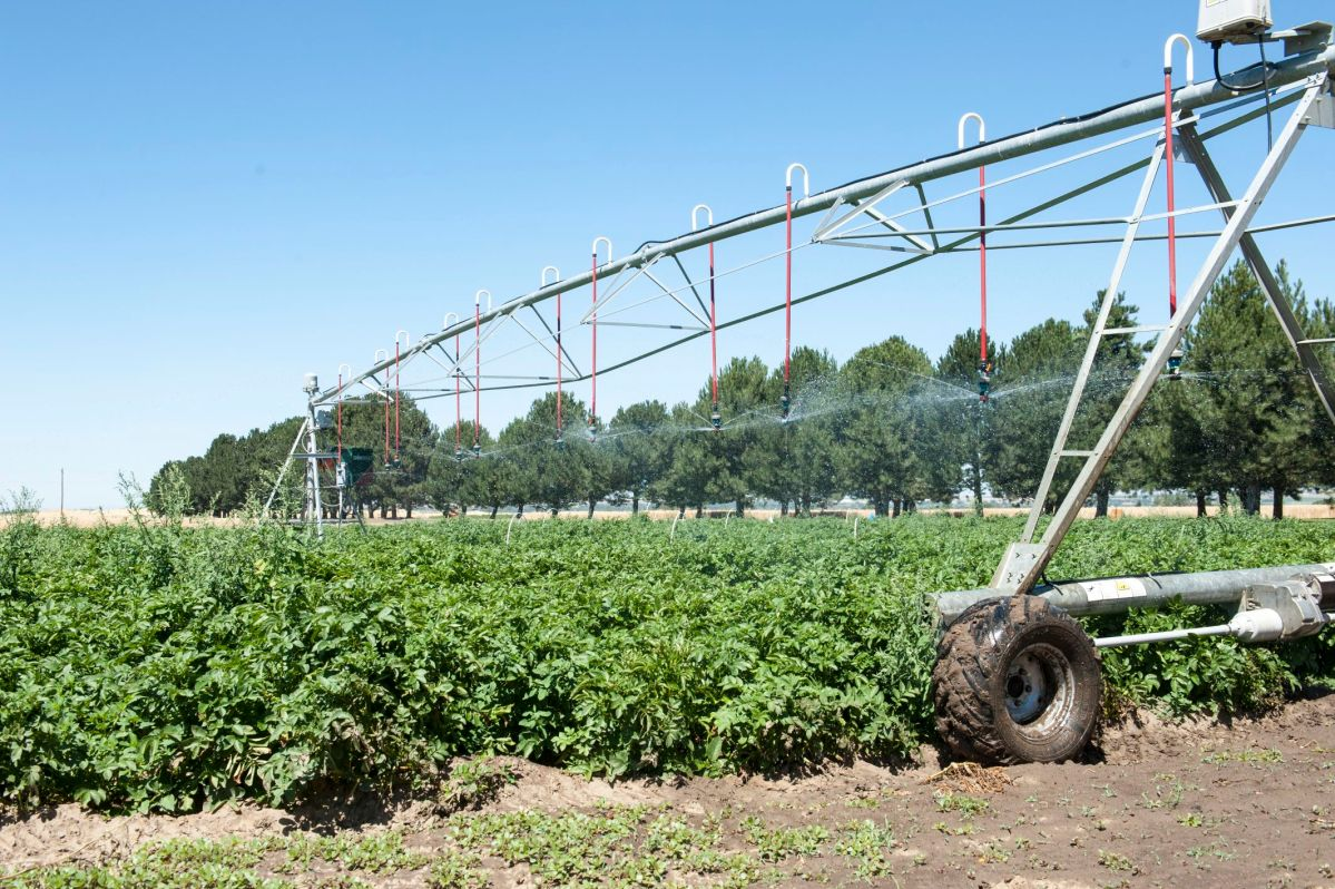 Mini pivot irrigation system on one of the test plots at OSU's Hermiston Agricultural Research and Extension Center.