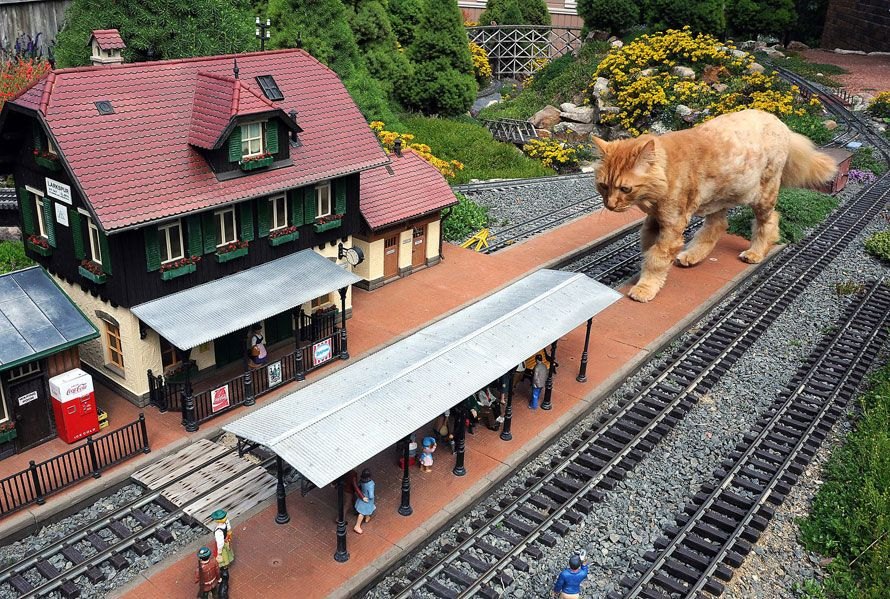 Chat ordre de grandeur train miniature