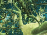 Neuroplasticiteit en genezing