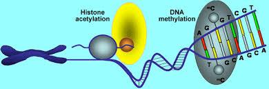 4 Verrassende bevindingen over de epigenetica