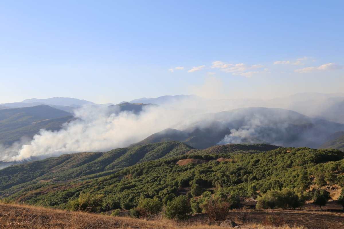 Guest Post: Turkey's war on Kurdistan's forests