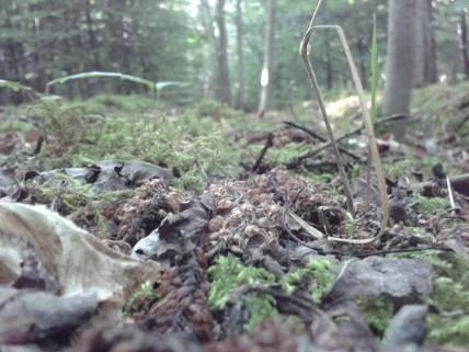 Waldboden Laub