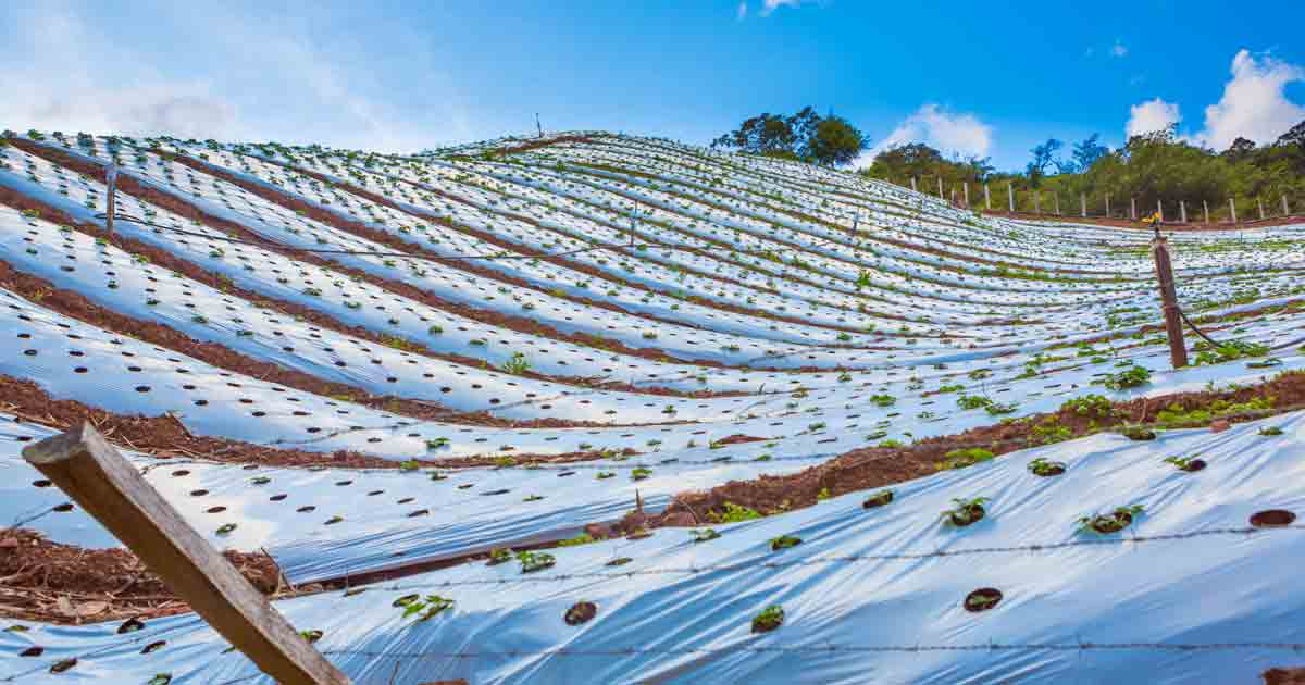 Organic Food Has a Plastic Problem