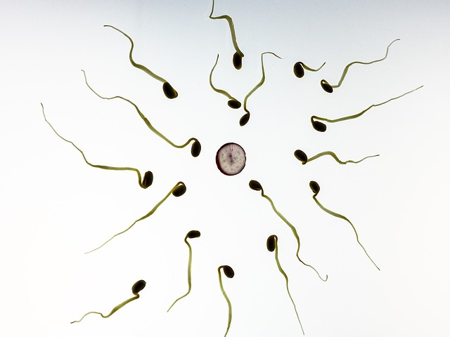 Top Tens Ways To Boost Male Fertility