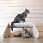 Twee katten in de buurt van Buiten Brasswork