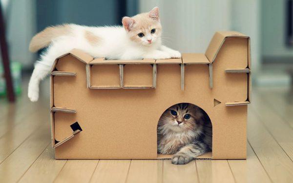 кошки в домике из коробки