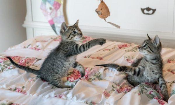 Cum să vă ajutați pisica să câștige în greutate