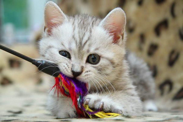 Котик закусил игрушку