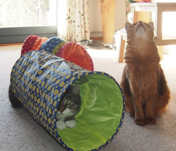 Котики и тоннель