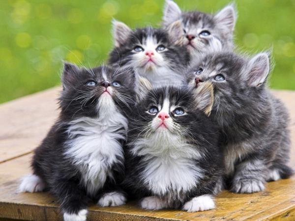 Kittens mici