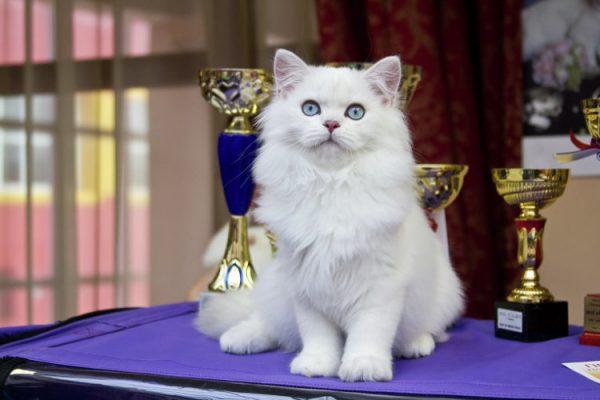 Expoziție pentru pisici