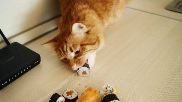 Кот крадёт со стола ролл