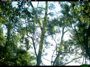Trail Cam Image 1095, August 11, 2009