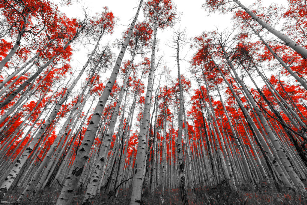 Project Dreamscape, trees, red tree