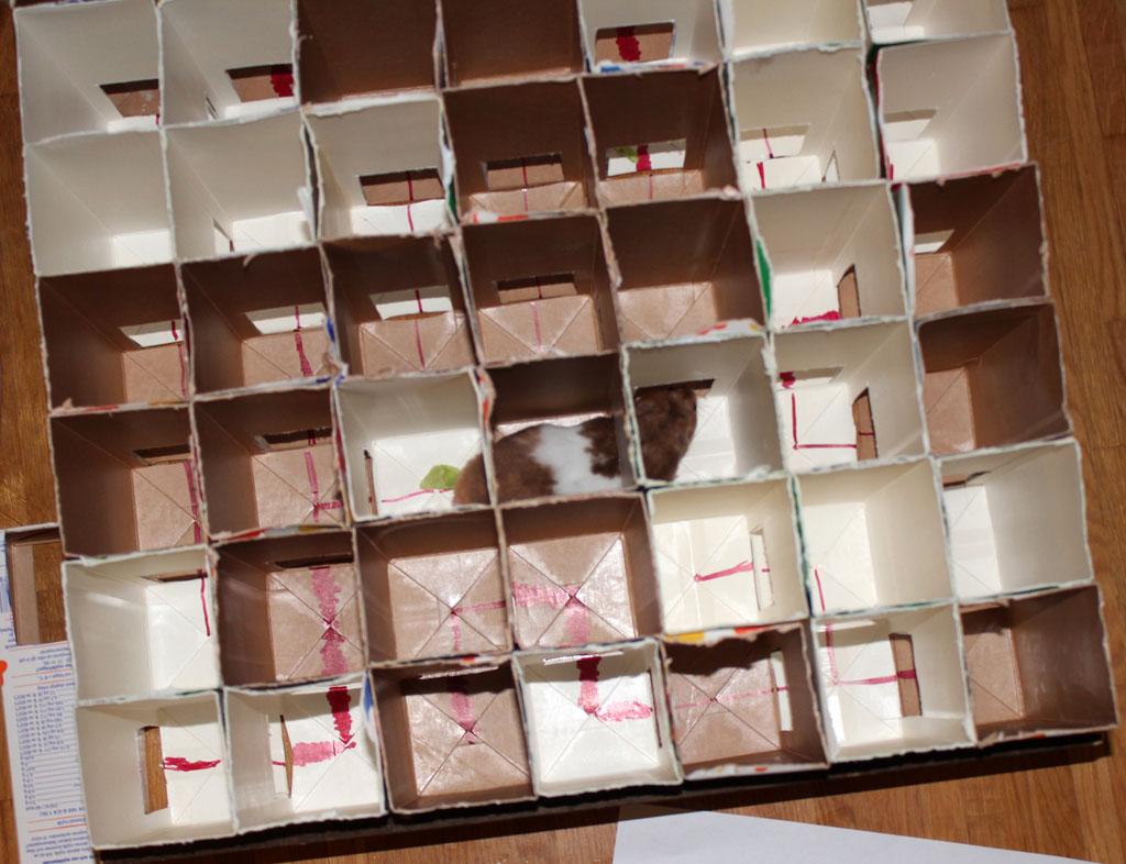 Diy Project Hamster Maze