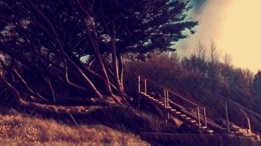 Stairway to wonder- land