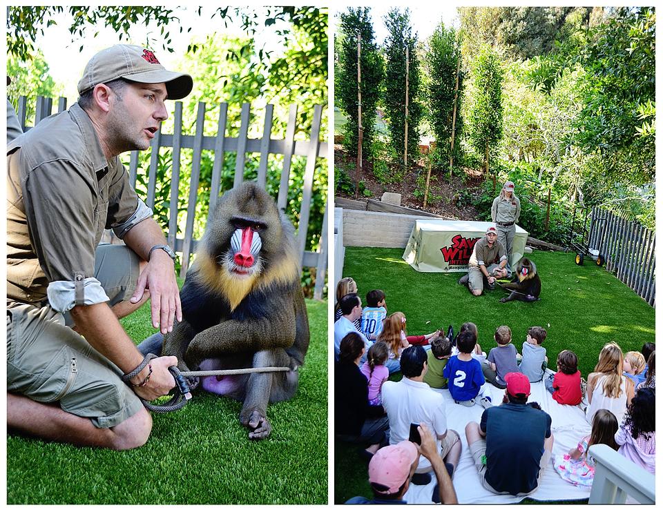 Liesl S 5th Birthday A Wild Safari Expedition Project Nursery