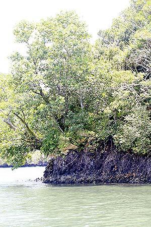 diwis island palau