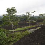 reserve biosphere Dja Cameroun