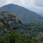 foret corridor écologique malaisie