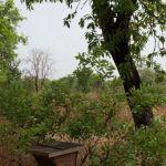 agroforesterie ghana