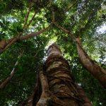 restaurer foret corridor écologique malaisie