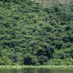 foret tropicale Bolobo congo