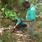 reforestation ghana