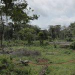 village projet agroforesterie cameroun