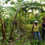 projet pepital agroforesterie bresil