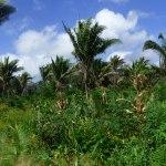 agroforesterie bresil