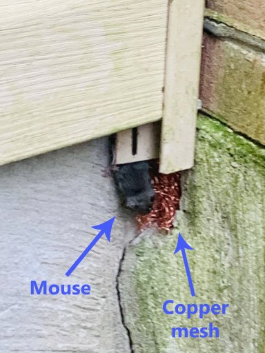 Copper mesh in a hole in a basement foundation preventing a mouse from entering a house