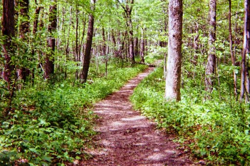 Hiking and running trail in a forest