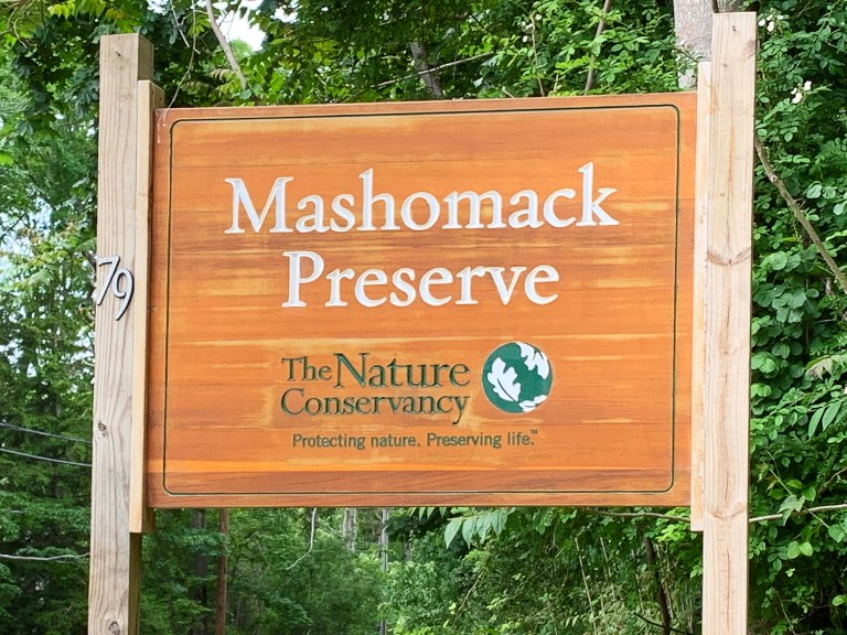 Wooden sign in green forest