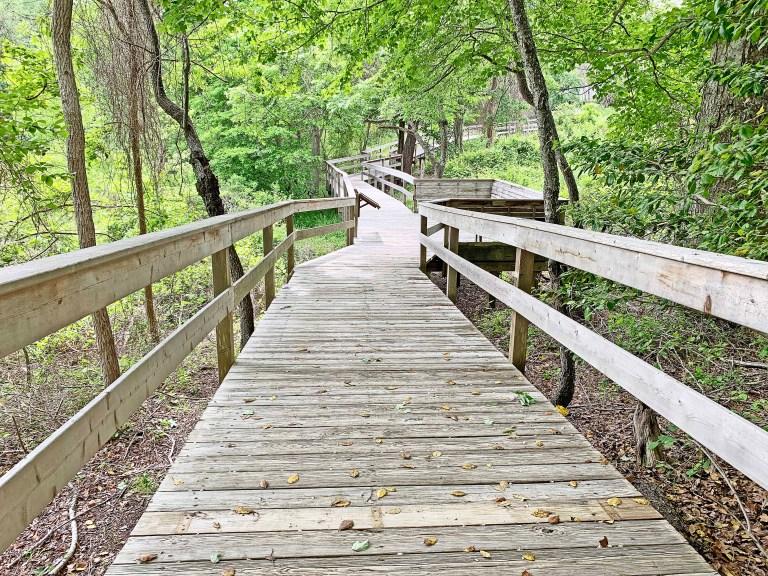 Wooden boardwalk in a green forest