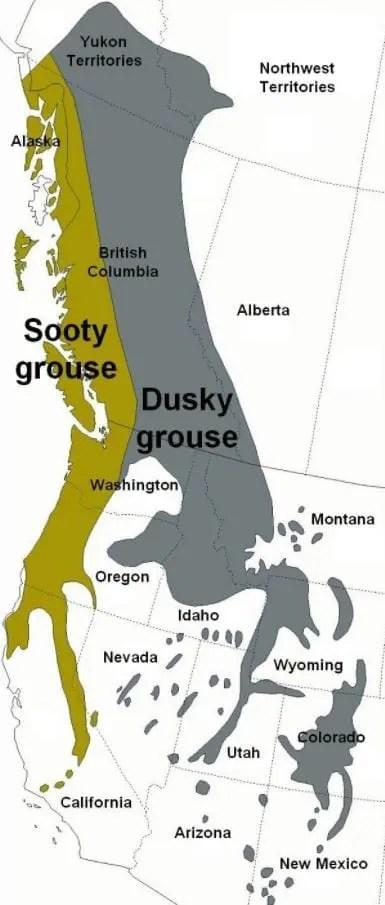 blue grouse distribution