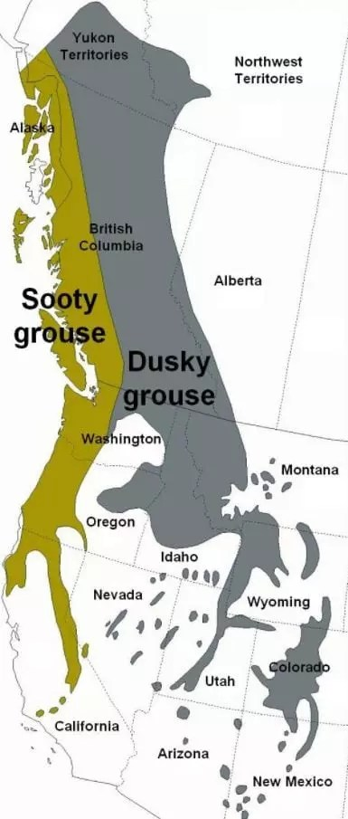 blue grouse distribution