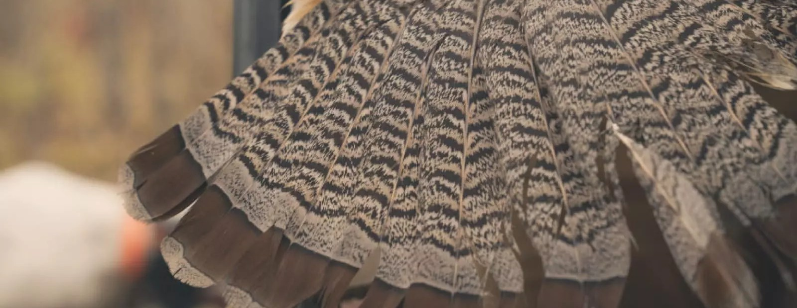 Ruffed Grouse Society Upland Survey