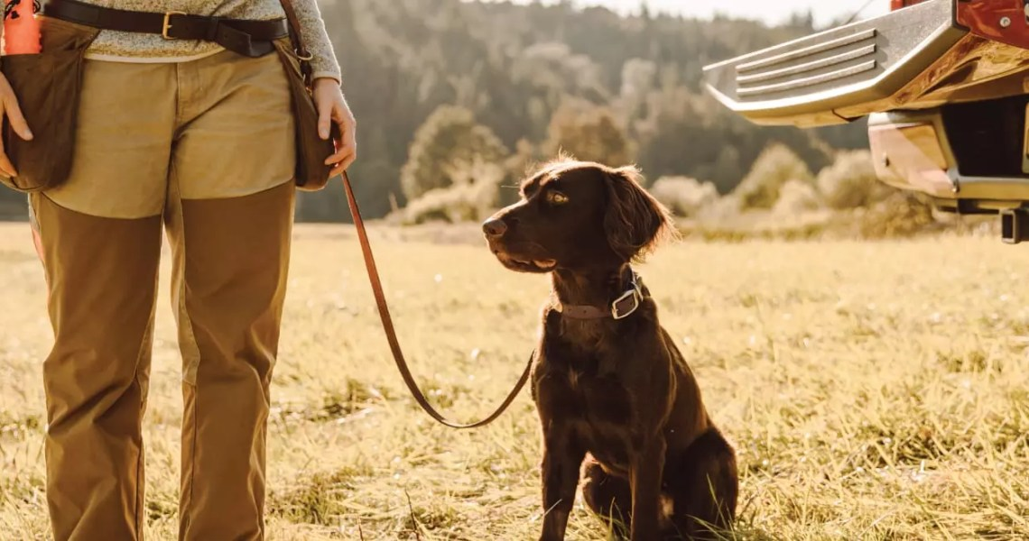 Reasons to Consider A Versatile Hunting Dog
