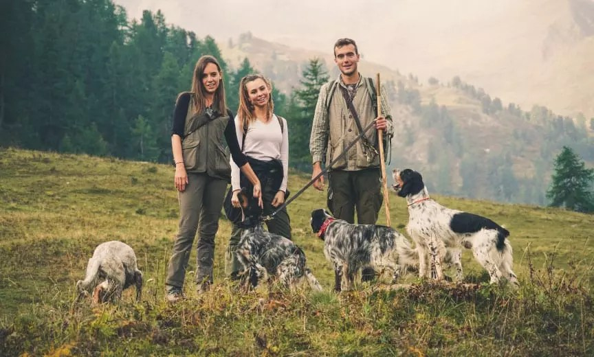 A group of people walking English setters in the Italian alps.