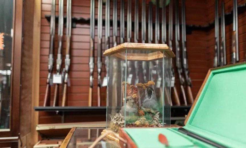 inside the Olathe gun shop with mounted birds on a counter and a gun rack.